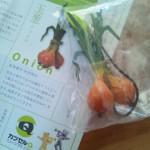 ベジコレ!~野菜ストラップコレクション~